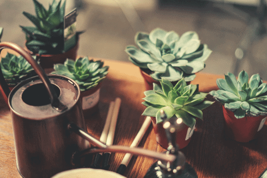 How Often Should you Water Succulents and Cacti ...